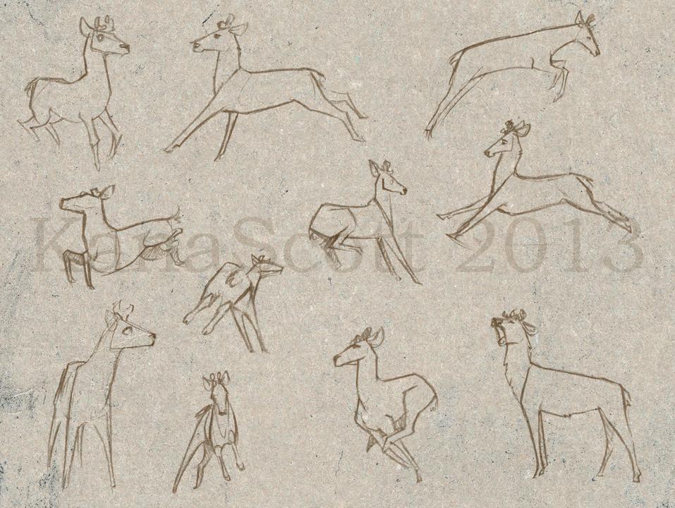 Roe Deer Sketches by KanaScott