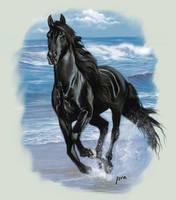 Black Beauty by IsraLlona