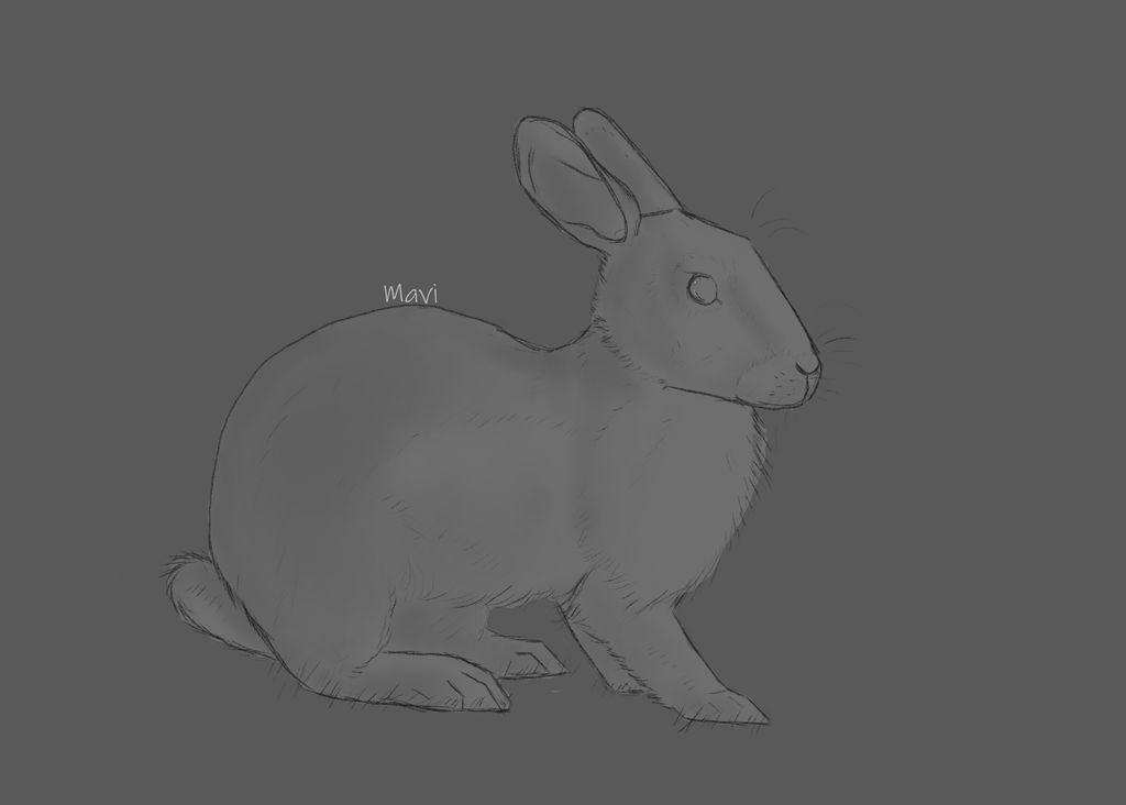 Rabbit by CopperAplomado