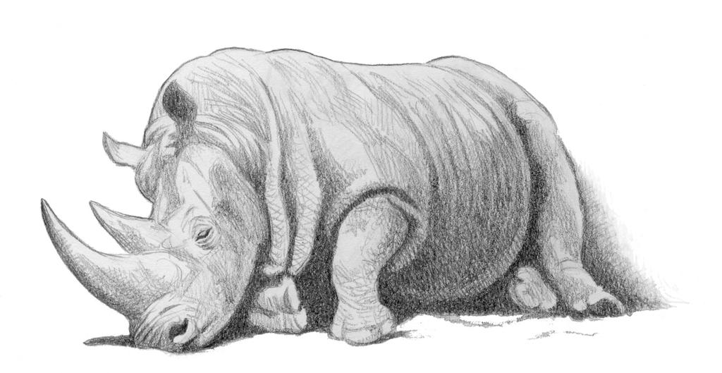 Cute Baby Rhino Falls Asleep - YouTube