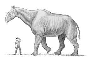Paraceratherium by WillemSvdMerwe