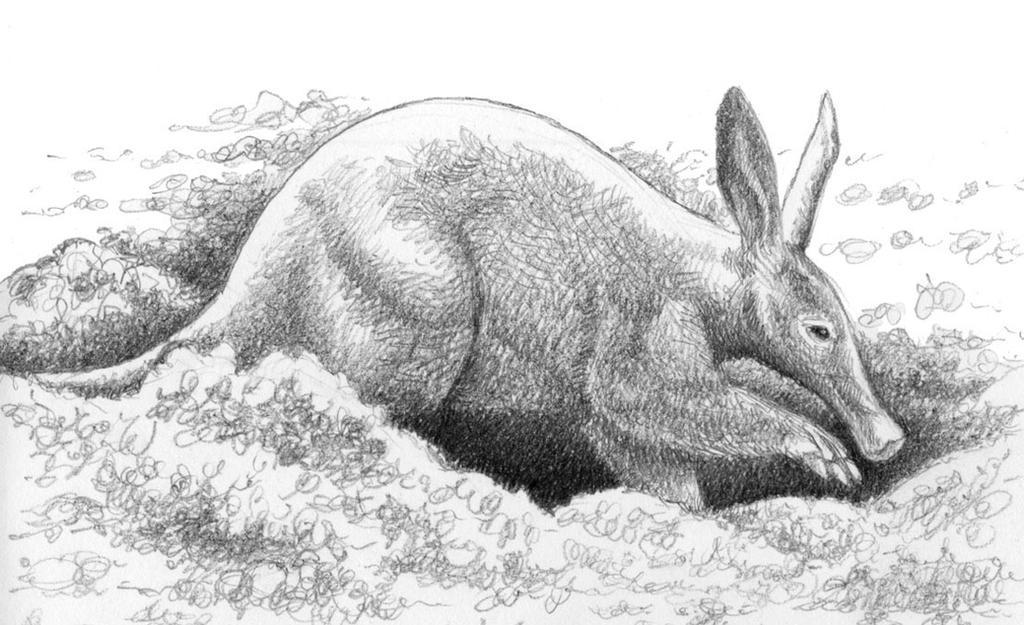 Digging Aardvark by WillemSvdMerwe