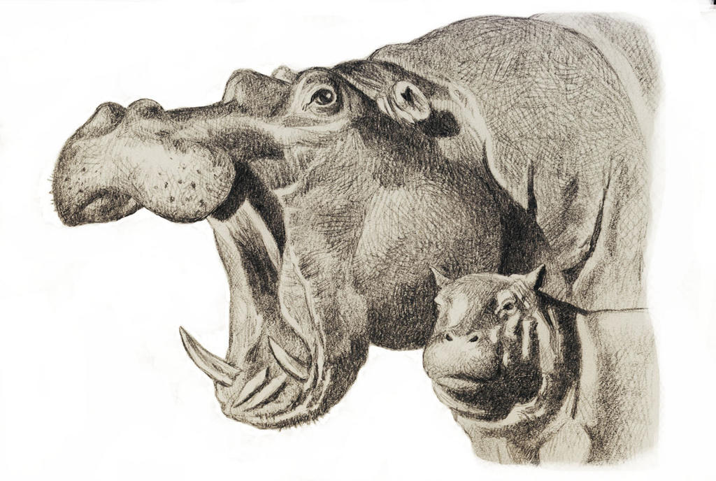 Hippo Mom and Baby by WillemSvdMerwe on DeviantArt  Hippo Mom and B...
