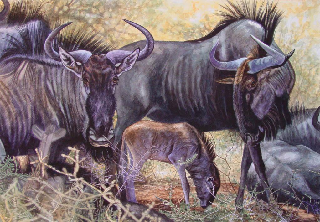 Blue Wildebeests by WillemSvdMerwe