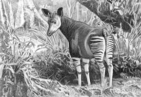 Okapi in forest Planning Sketch