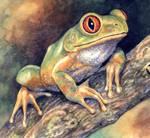 Forest Tree Frog by WillemSvdMerwe