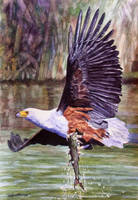 African Fish Eagle by WillemSvdMerwe