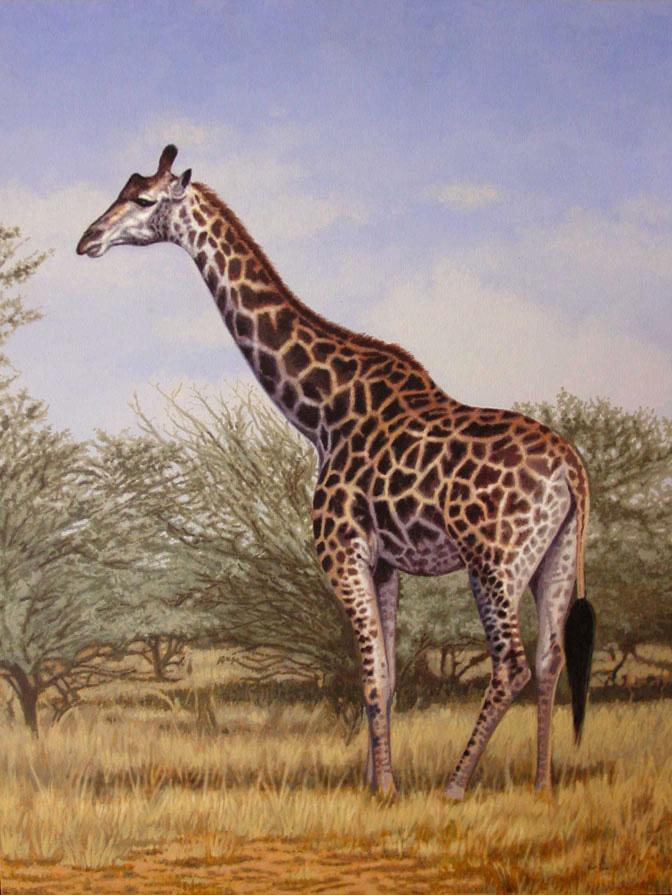 Giraffe Full Body Prof...