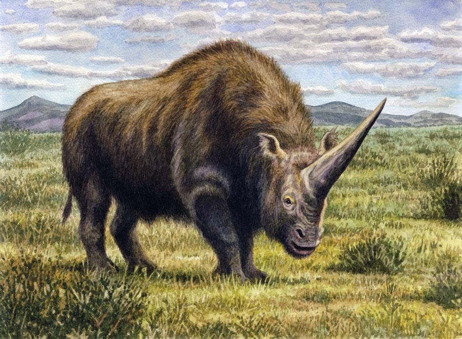 Elasmotherium caucasicum by WillemSvdMerwe