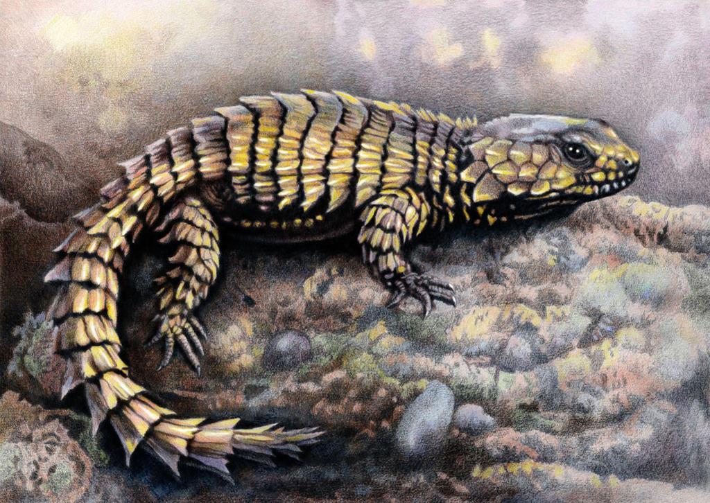 Armadillo lizard wallpaper - photo#2