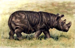 Sumatran Rhino by WillemSvdMerwe