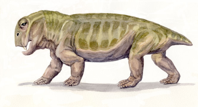 Lystrosaurus 2 by WillemSvdMerwe