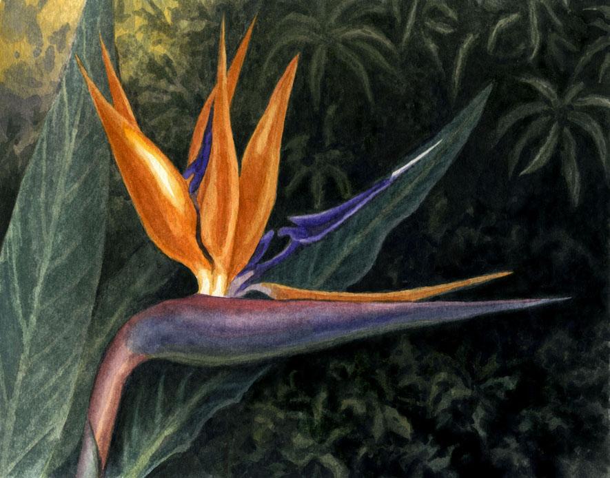Crane Flower by WillemSvdMerwe