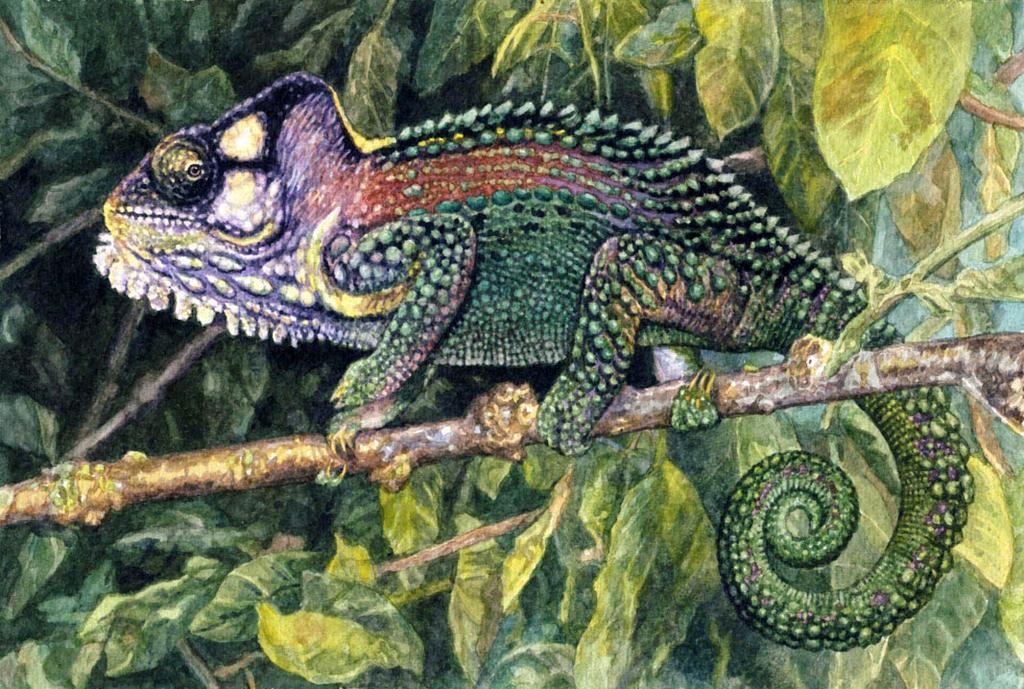 Knysna Dwarf Chameleon by WillemSvdMerwe