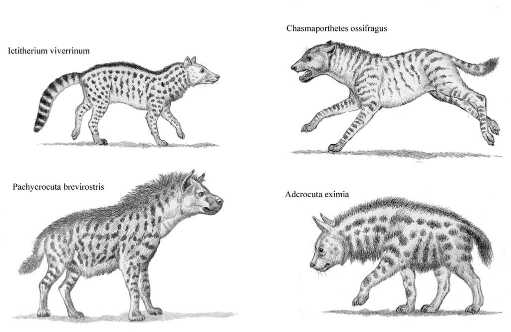 prehistoric hyenas by willemsvdmerwe