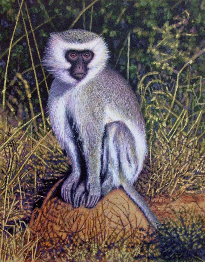 Vervet Monkey by WillemSvdMerwe