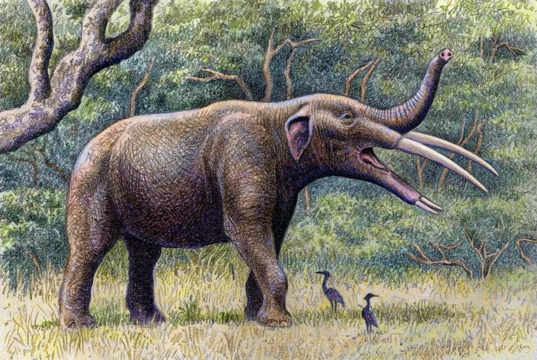 Image result for Gomphotherium