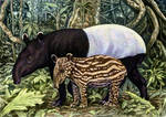 Tapir Mom and Baby