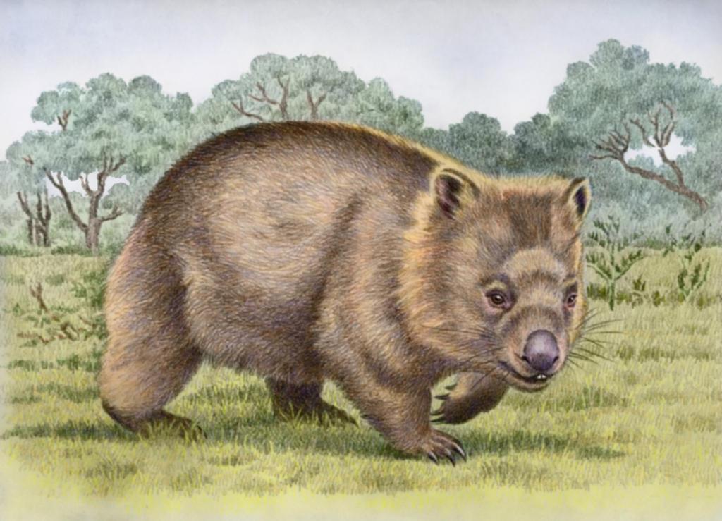 Common Wombat by WillemSvdMerwe
