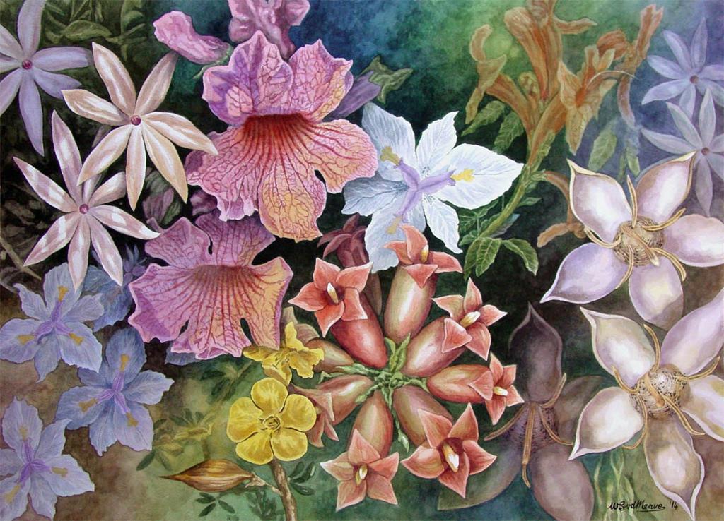 Compound Flowers by WillemSvdMerwe