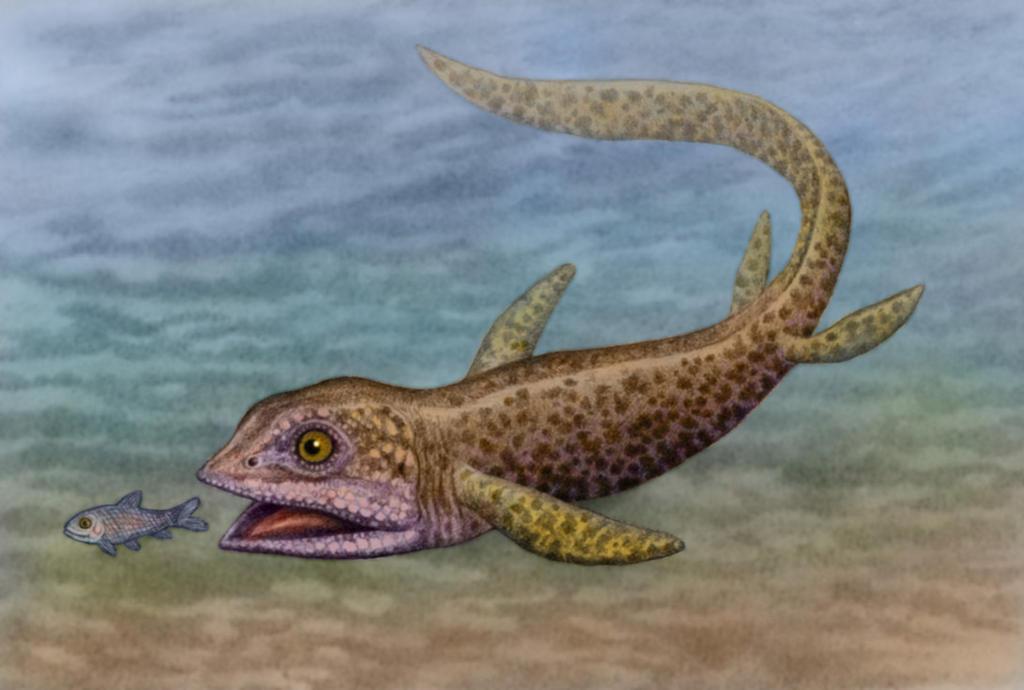 Cartorhynchus lenticarpus by WillemSvdMerwe