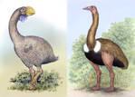 Dromornis and Aepyornis