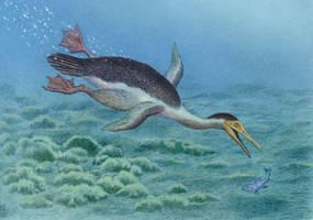 Copepteryx hexeris by WillemSvdMerwe
