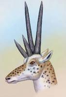 Tetrameryx shuleri by WillemSvdMerwe
