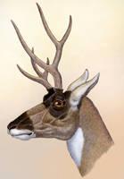 Ramoceros osborni, the Deer Mimic Pronghorn by WillemSvdMerwe