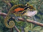 Natal Midlands Dwarf Chameleon by WillemSvdMerwe