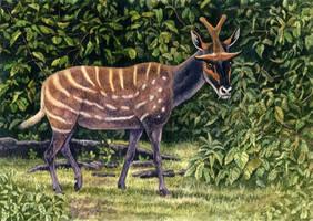 Ampelomeryx ginsburgi by WillemSvdMerwe
