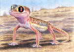 Web-footed Gecko