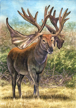 Cervalces scotti, the Stag-Moose