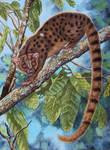 African Palm Civet