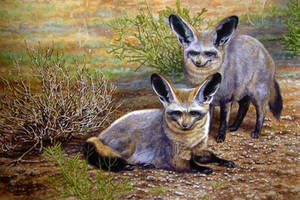 Bat-Eared Foxes by WillemSvdMerwe