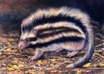 Maned Rat