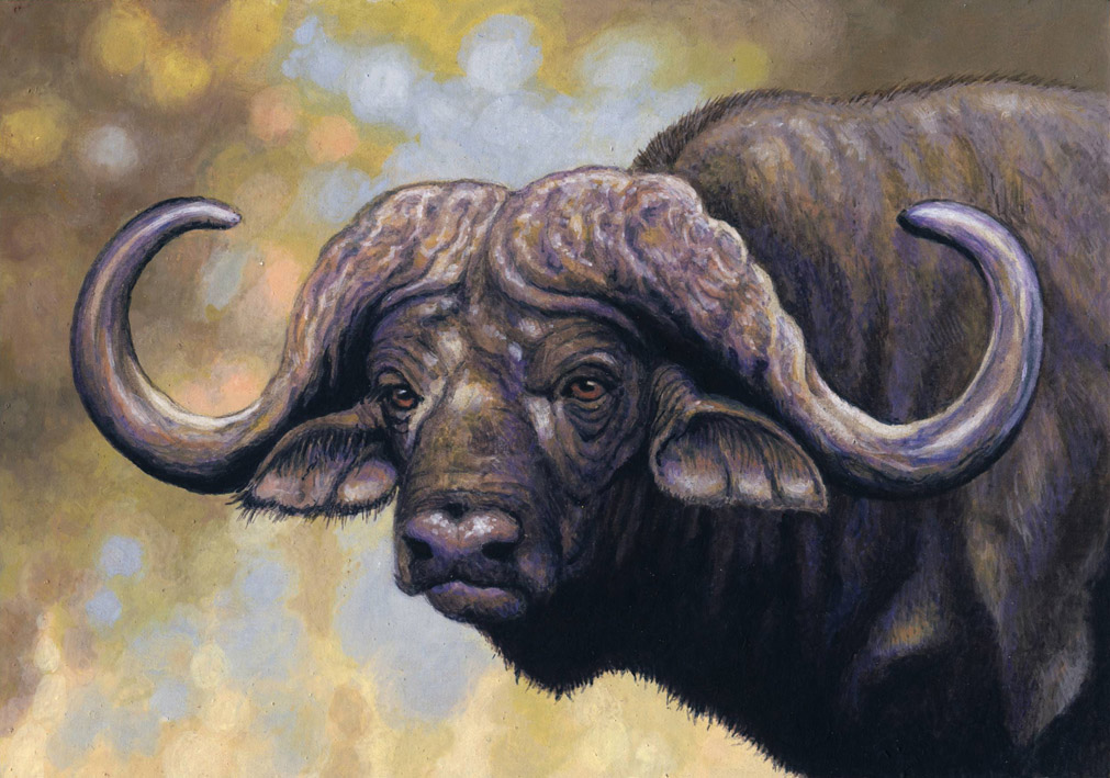 African Buffalo by WillemSvdMerwe
