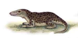 Scaloposaurus constrictus