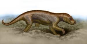 Thrinaxodon liorhinus
