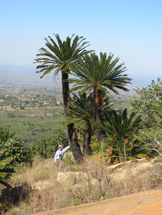 Cycad and Ib by WillemSvdMerwe