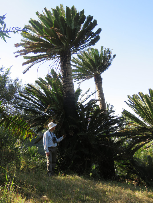 Me and Cycads b by WillemSvdMerwe