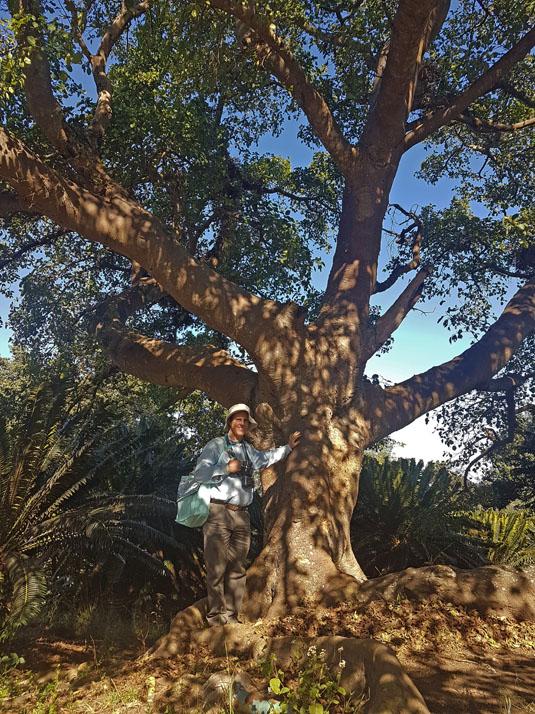 Ficus sycomorus b by WillemSvdMerwe