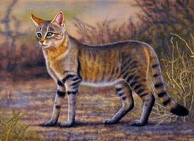 African Wild Cat by WillemSvdMerwe