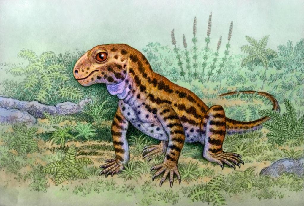 Patranomodon nyaphulii by WillemSvdMerwe