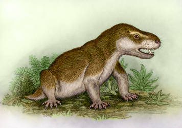 Charassognathus gracilis by WillemSvdMerwe