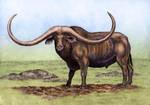 Syncerus antiquus