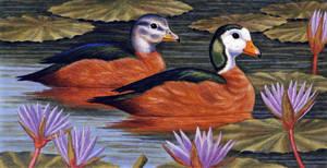 Pygmy Geese