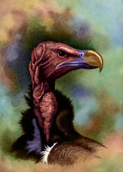 Lappetfaced Vulture