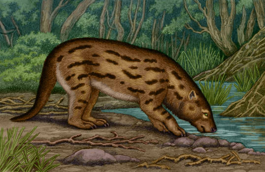 Proborhyaena gigantea