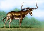 Megalotragus priscus